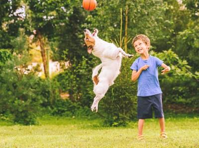 ジャンプしてボールで遊ぶ犬と男の子
