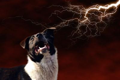 雷に怯えて上を見つめる犬