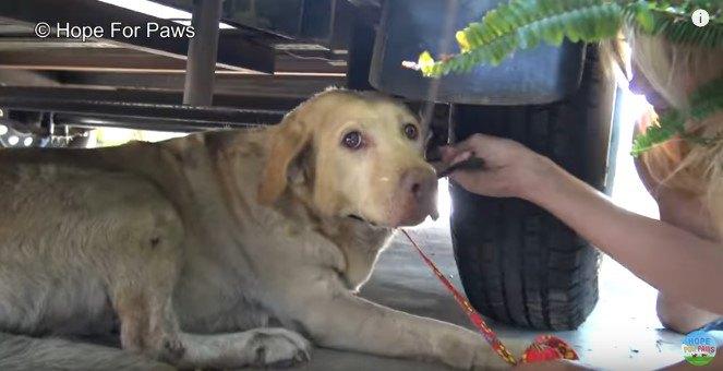 カメラの方を見上げる犬