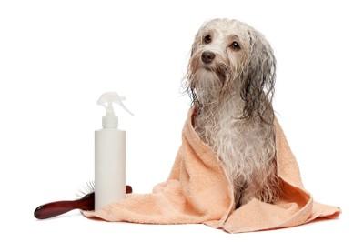 お風呂上がりの犬 38539327
