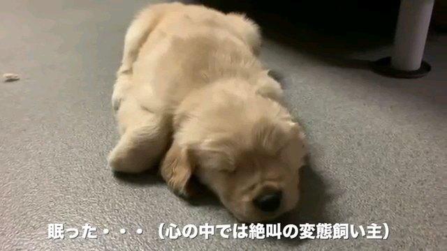 眠った…~字幕