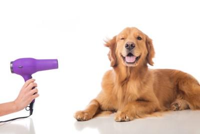 ドライヤーを使う犬 76335522