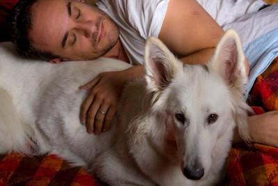 男性と一緒にベッドで寝ている犬