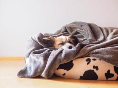 ベッドに潜っている犬