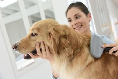 女性にブラッシングされている犬