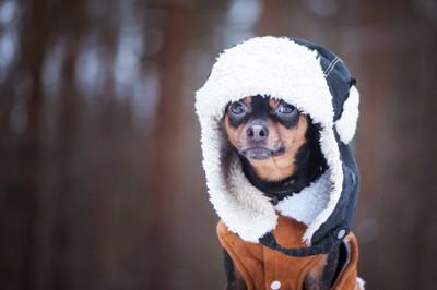 防寒対策をする犬