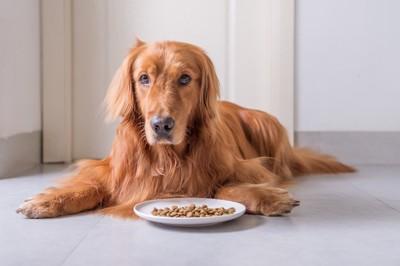 皿の前に座る犬