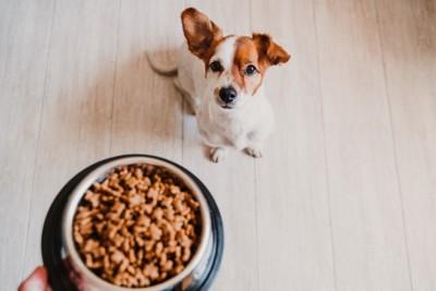 食事を用意される犬