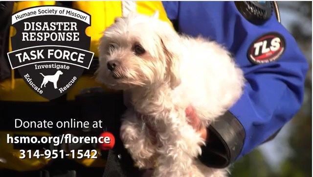 救助された犬