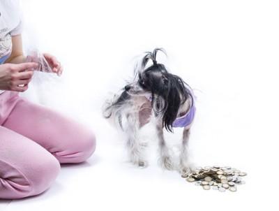 小銭の前で飼い主を振り返る犬