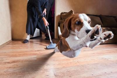 掃除機をかける人から逃げ出す犬