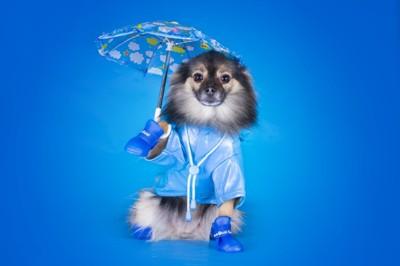 犬が傘をさしている
