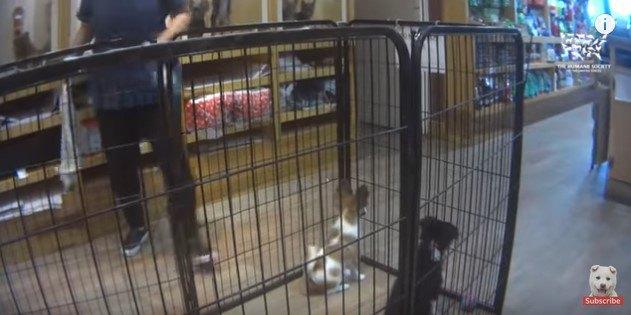 タオルではたかれる前の犬たち