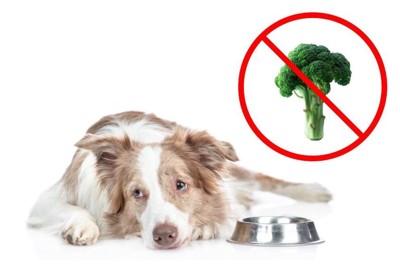 悲しそうな顔で食器の横に伏せる犬