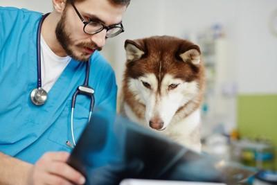 レントゲンを一緒に見ている獣医師と犬