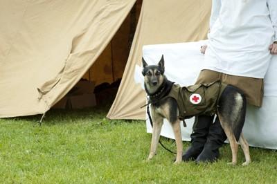 第二次大戦時の軍用犬