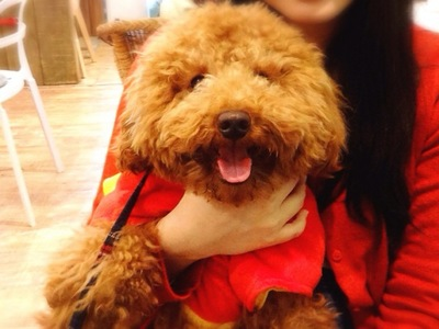 嬉しそうな犬の表情
