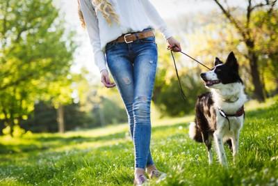 お散歩する犬と女性