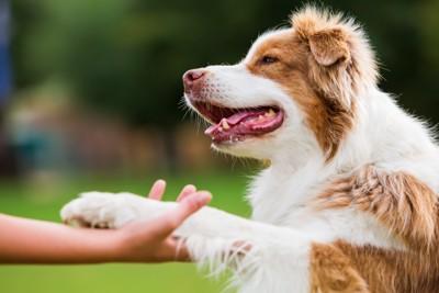手を差し出している犬