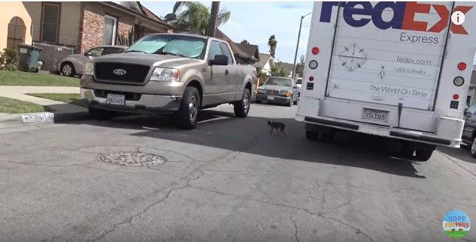 道路を渡る犬