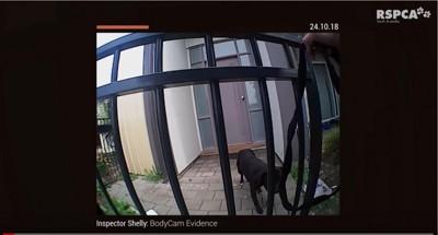 ゲートの中の黒犬