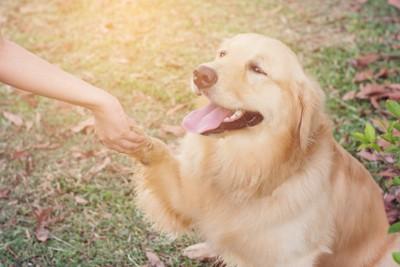 犬と握手 124637867
