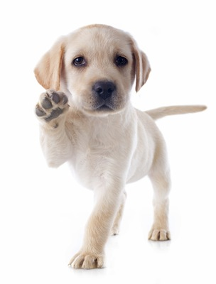 片足をあげる子犬