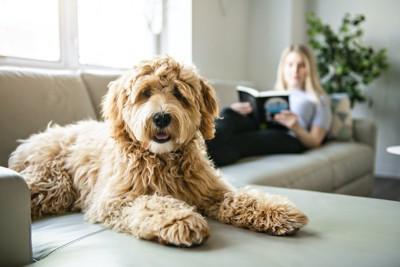 ソファーで本を読む飼い主とそばでくつろぐ犬