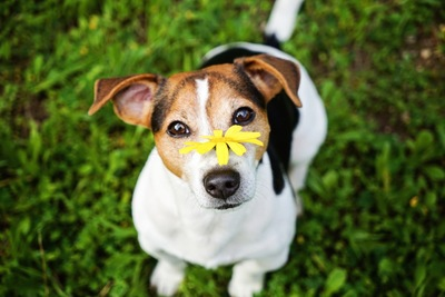 鼻の上に黄色い花を乗せた犬
