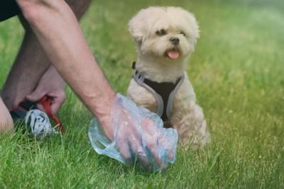 ウンチをした犬と処理する手