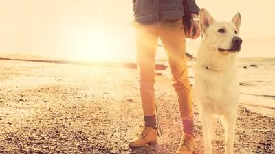 愛犬の将来