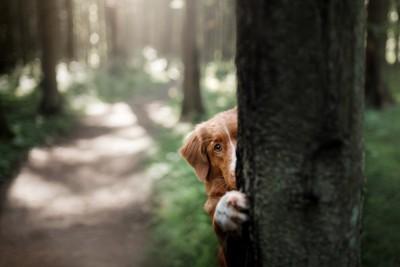 木に隠れる犬