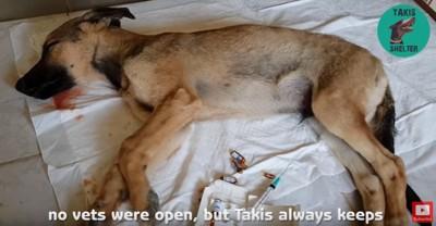 応急手当を受ける犬