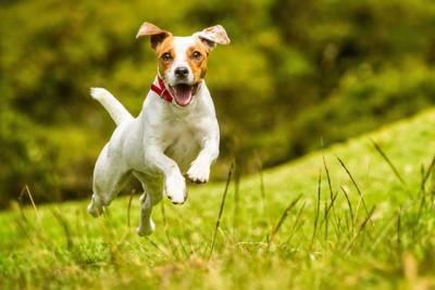草原を飛び跳ねている犬