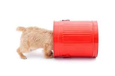 ゴミ箱に挟まる子犬