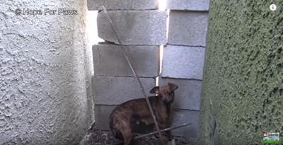家と家の間に隠れる犬