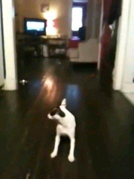 振り替える犬