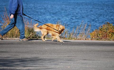 散歩をしている犬