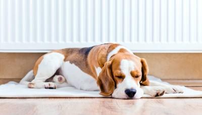 ヒーターの前で眠る犬