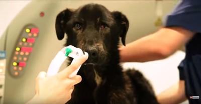 麻酔ガスを吸い込む犬