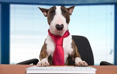 ネクタイを締めた犬