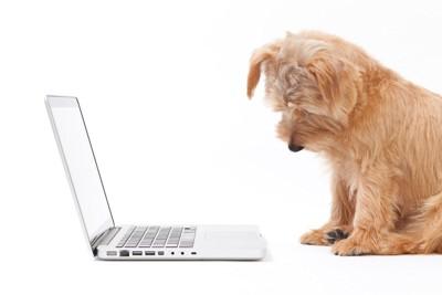 ノートパソコンを見る犬