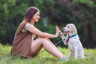 タッチする少女と子犬