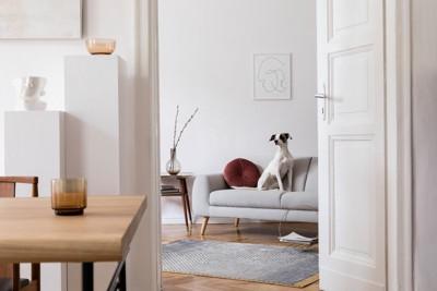 白いソファの上の犬