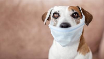 犬がマスクをしている