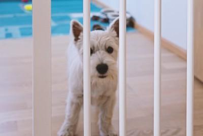 柵越しにこちらを見つめている犬