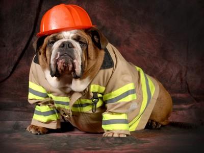 消防士の犬