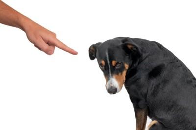 飼い主に指を差されて叱られている犬