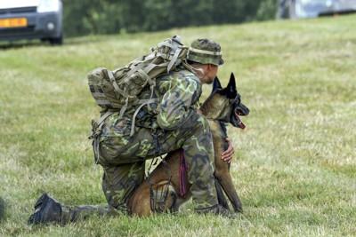 訓練中のシェパード犬と兵士