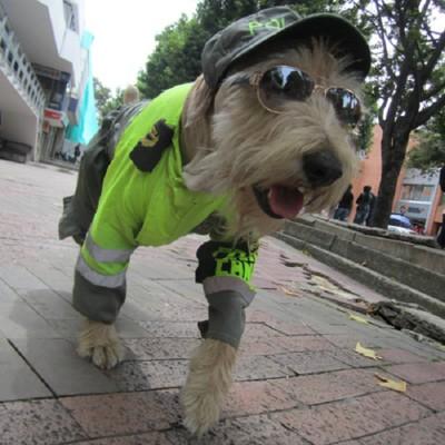 コスプレして歩く犬